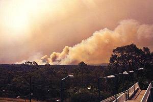"""Pożary lasów w Australii: """"Czegoś takiego nie było od 40 lat"""""""