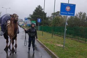 Wielkopolska: poszukiwany nocleg dla dziewczyny z wielbłądem. Pieszo przemierzają kraj