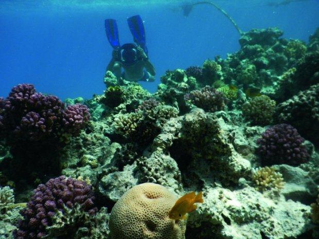 8 aparatów do fotografii podwodnej