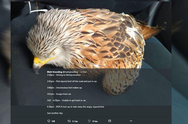 Ranny ptak