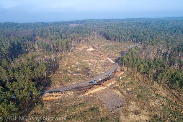 Zdjęcie numer 0 w galerii - Zdążyć przed 1 marca. Rzeź drzew na Mierzei Wiślanej [ZDJĘCIA Z DRONA]