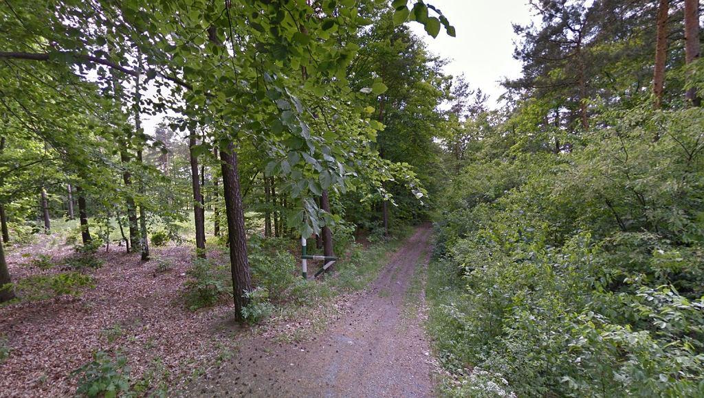 Las w okolicy Rybnika (zdjęcie ilustracyjne)