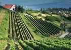5 pomysłów na podróż po węgierskich winnicach