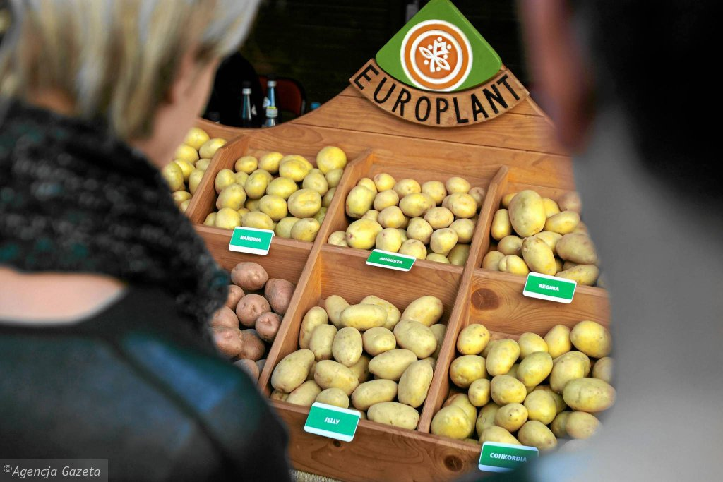 Żywność prezentowana na Festiwalu Smaku w Lublinie, wrzesień 2013 r.