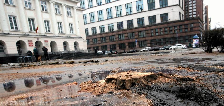 Wycinka na skwerze przed urzędem Warszawa - Śródmieście