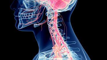 Istota szara mózgu to skupisko komórek nerwowych, które razem z istotą białą tworzą ośrodkowy układ nerwowy