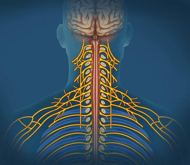 Nerw błędny: funkcje. Objawy uszkodzenia nerwu błędnego