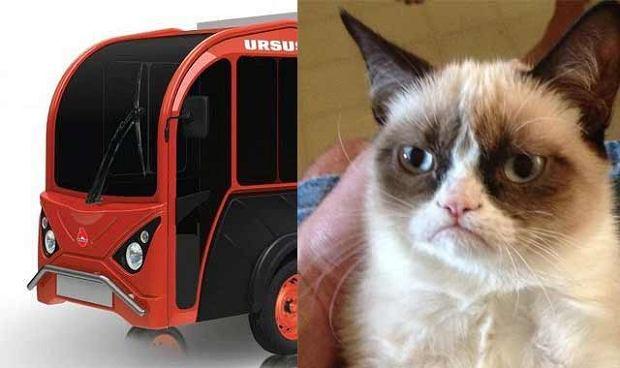 Ursus i Grumpy Cat - jak bracia?