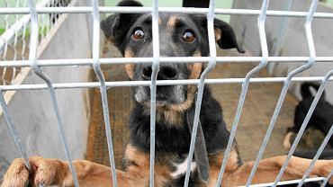 Pies w schronisku (zdjęcie ilustracyjne)