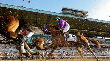 Na ten dzień czekali wszyscy pasjonaci wyścigów konnych. California Chrome miał szansę po raz pierwszy od 1978 roku zdobyć tzw. potrójną koronę. Pierwsze dwie gonitwy wygrał, trzeciej - Belmont Stakes - już jednak nie dał rady. Do historycznego wyczynu zabrakło niewiele...