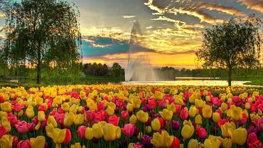 Chicago, USA - ogród botaniczny
