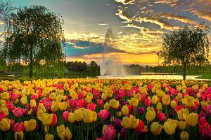 Chicago ogród botaniczny