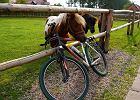 Kilka powodów dla których rower jest lepszy od konia