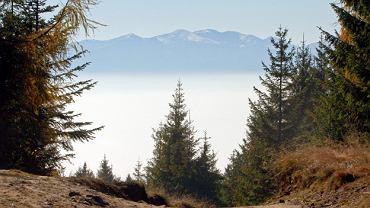 Polskie góry. Gorce. Pasmo w Beskidach Zachodnich między Ziemią Sądecką a Beskidem Wyspowym. Najwyższy szczyt, Turbacz, ma 1310 m n.p.m. Gorce są wyjątkowo malownicze. Z punktów widokowych zobaczyć można m.in. Podhale i Tatry. Dużą powierzchnię masywu zajmują lasy, między którymi występują liczne polany.  Szczególnie atrakcyjny krajobrazowo jest Gorczański Park Narodowy.