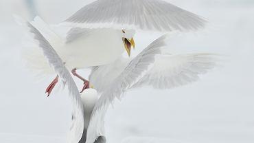 Michał Jastrzębski, Sprzeczka. Najlepsze zdjęcia National Geographic 2011. GRAND PRIX