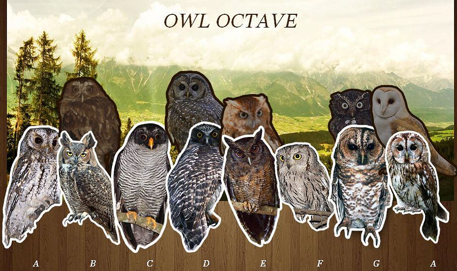 Owl Octave