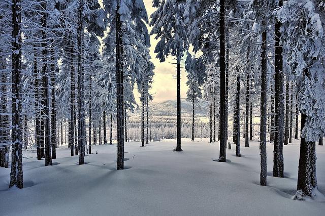 Góry Izerskie fot. Szymon Nitka/CC/Flickr.com