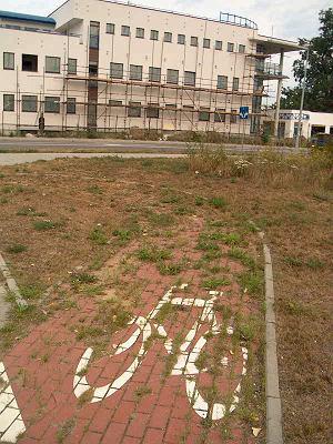 Ekologia kostki ogranicza się do zarastania trawą / fot. Rafał Muszczynko