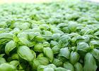 Kuchnia pachnąca ziołami