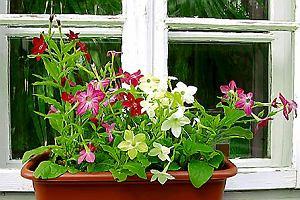 Kwiaty Na Bardzo Słoneczny Balkon Projektowanie