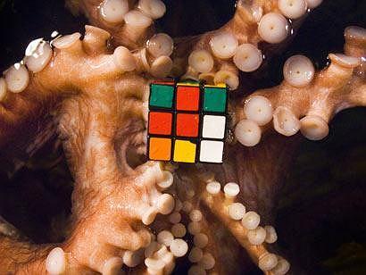 fot. za ananova.com