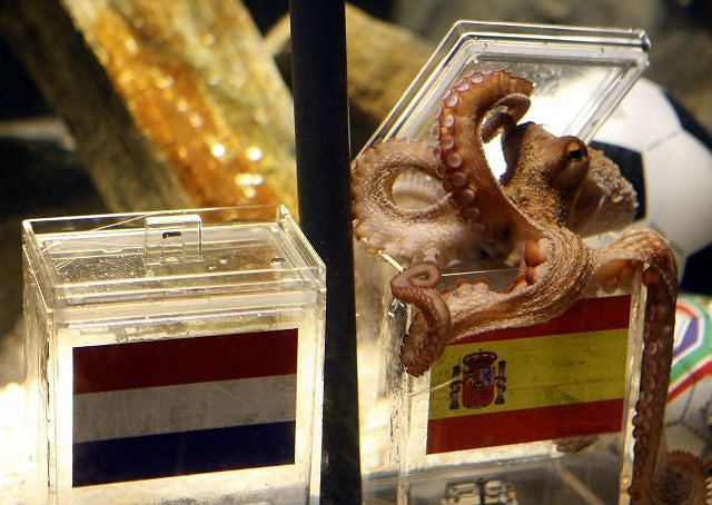 Hiszpania zwycięstwo w finałowym meczu ma zapewnione... przez ośmiornicę