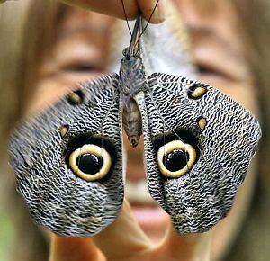 Peru: Farma motyli koło miasta Iquitos prowadzona przez mieszkającą tu Austriaczkę.