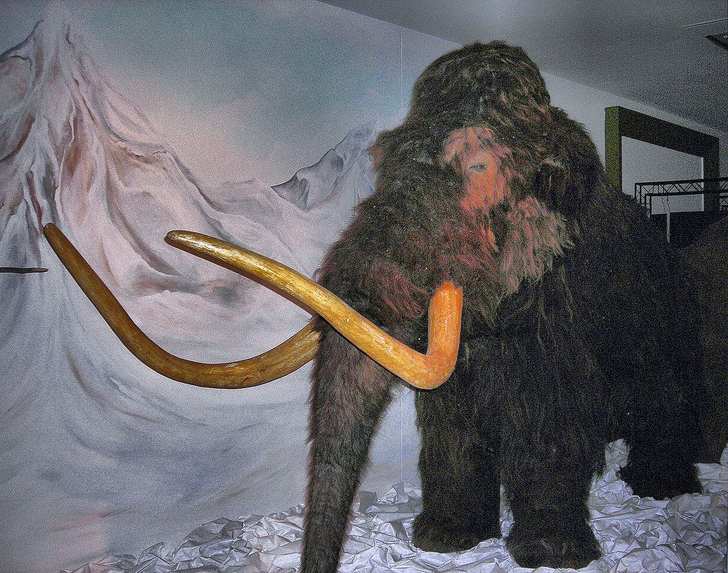 Rekonstrukcja włochatego mamuta w londyńskim Horniman Museum.