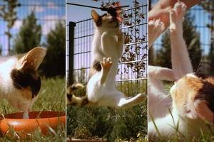Kotek w zwolnionym tempie