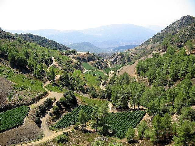 Cypr. Plantacje pomidorów na stokach gór Troodos, na południe od Lazanias