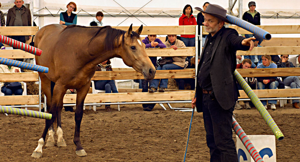 zaklinacz koni, konie