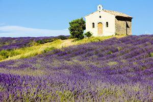 Prowansja - uroki południowej Francji