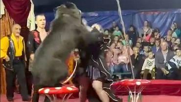 Niedźwiedź zaatakował kobietę podczas występu