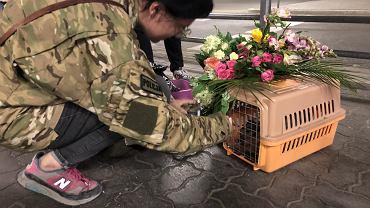 Jagoda Grondecka wróciła do Polski razem ze swoim kotem