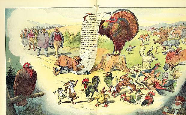 Zwierzęta świętują masowe podpisywanie deklaracji wegetarianizmu przez ludzi... Niestety, to tylko sen indyka, naktórego czyha człowiek z siekierą przed Świętem Dziękczynienia (ilustracja amerykańska z 1904 r.)