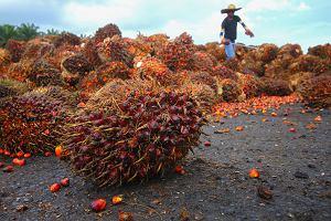 Kontrowersyjny olej palmowy: Ile go przejadamy? Gdzie go szukać? Sprawdzamy