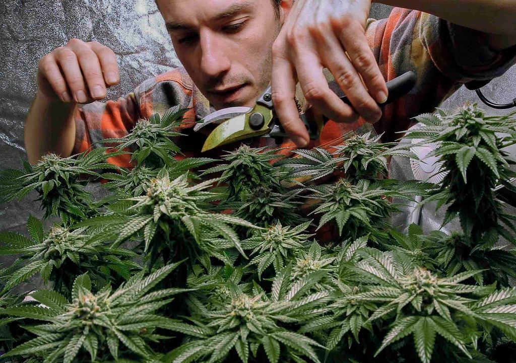 Nowy Jork zalegalizował rekreacyjne użycie marihuany