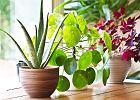 Rośliny do mieszkania, które nie potrzebują skomplikowanej pielęgnacji