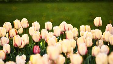 29 kwietnia 2020 r. Wiosna w Ogrodzie Botanicznym