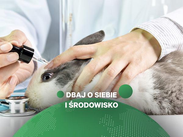 """Jak sprawdzić, czy kosmetyk nie był testowany na zwierzętach? """"Króliczek na opakowaniu jest zbędny"""""""