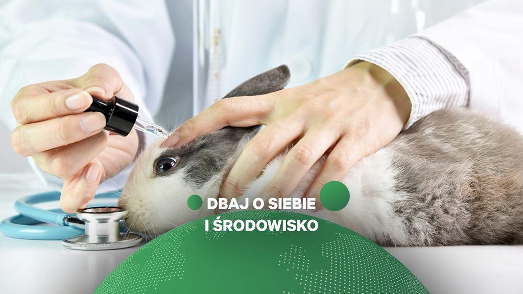 Testy na zwierzętach w przemyśle kosmetycznym to problem, o którym nadal niewiele się mówi