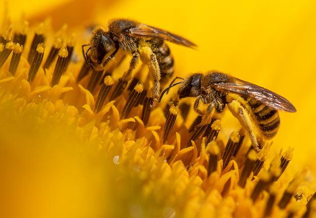 Pszczoły Różnymi Aktualne Wydarzenia Z Kraju I Zagranicy