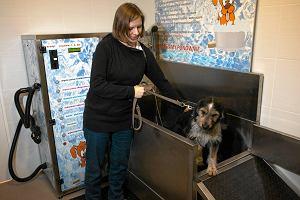 Pierwsza w Olsztynie (samoobsługowa) myjnia dla psów