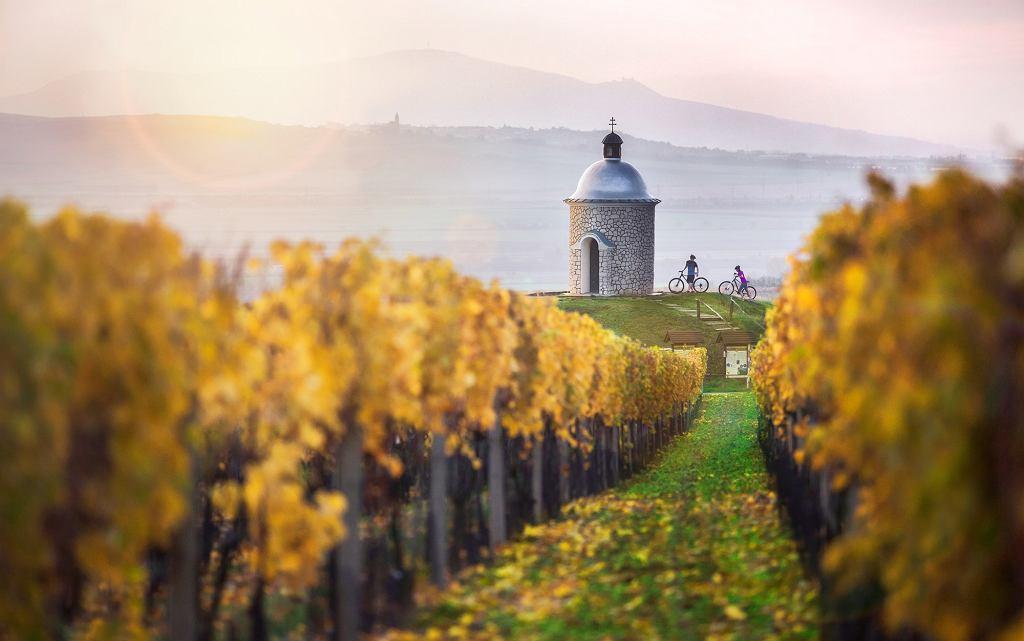 Winnice w regionie Palavy
