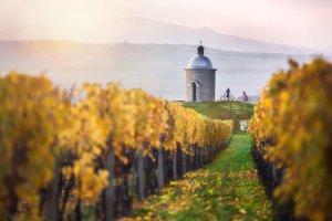 Do Czech na wino! Listopadowa wyprawa szlakiem uroczystości świętomarcińskich