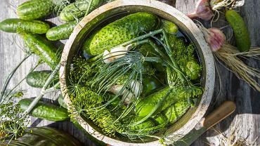 Spragnieni świeżych, sezonowych warzyw, ogórki małosolne najchętniej robimy już na przełomie maja i czerwca