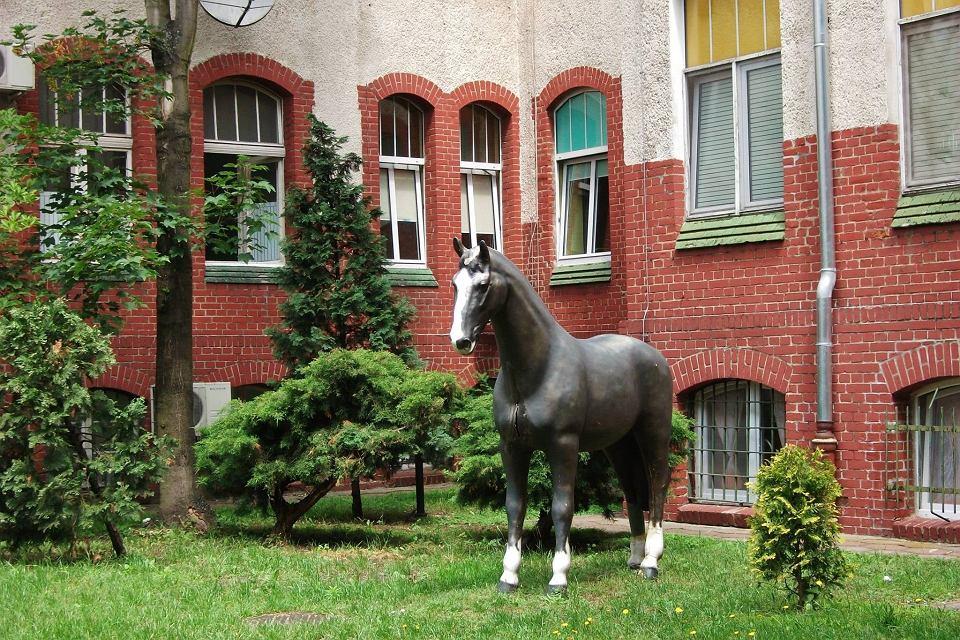 Koń przed szpitalem. Jego historia przez lata owiana była tajemnicą