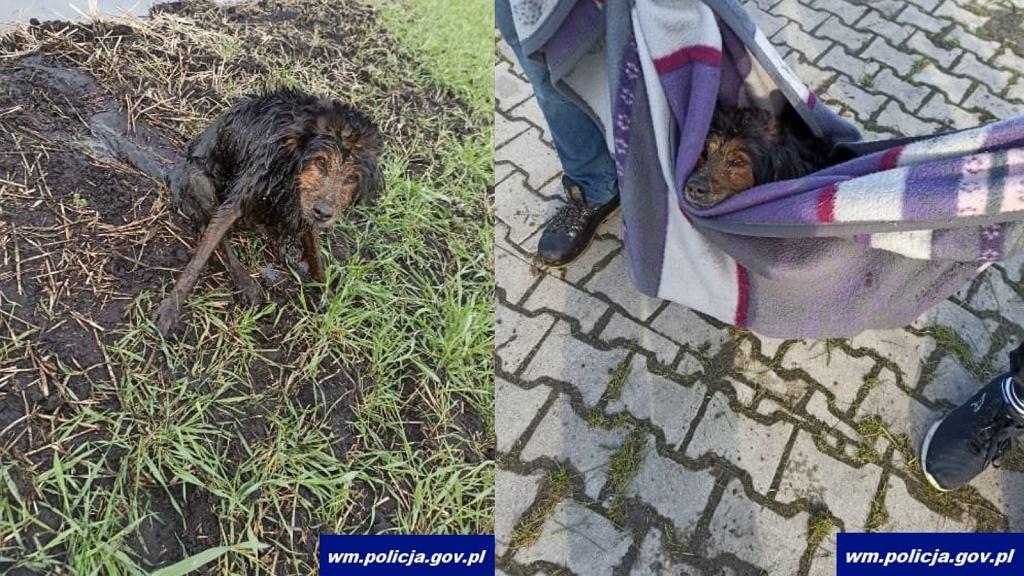 Pies wyciągnięty z rowu