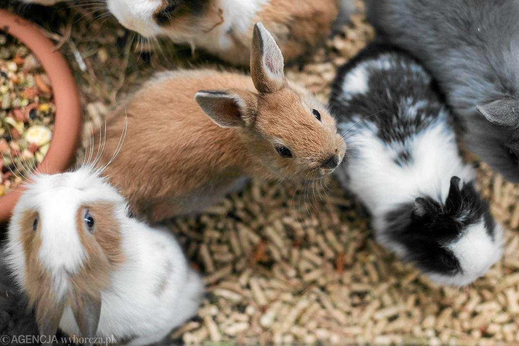 Zwierzęta w sklepie zoologicznym