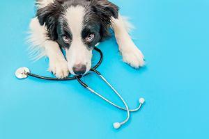 Na leczenie zwierząt domowych wydajemy krocie. Rozwiązaniem mogą być polisy?